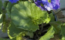Rośliny doniczkowe: kwiaty doniczkowe na balkon i taras. Galeria