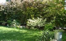 Zadbany trawnik: instrukcja zakładania trawnika krok po kroku