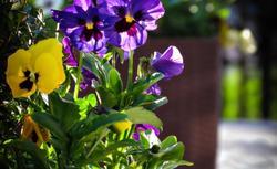 Kwiaty w ogrodzie. Jakie rośliny sadzić, by ogród był kolorowy przez cały sezon