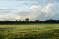 Odrolnienie gruntów