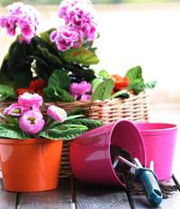 Kwiaty i rośliny na balkon